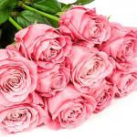 Роза (Голландия)